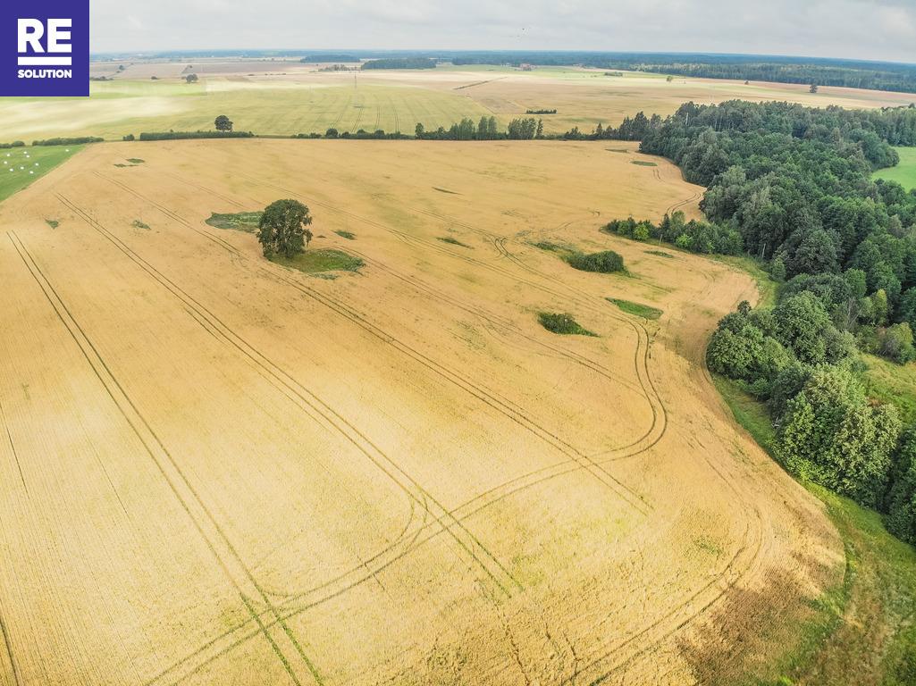 21,73 ha sklypas šalia tvenkinio, netoli automagistralės Klaipėda-Kaunas nuotrauka nr. 6